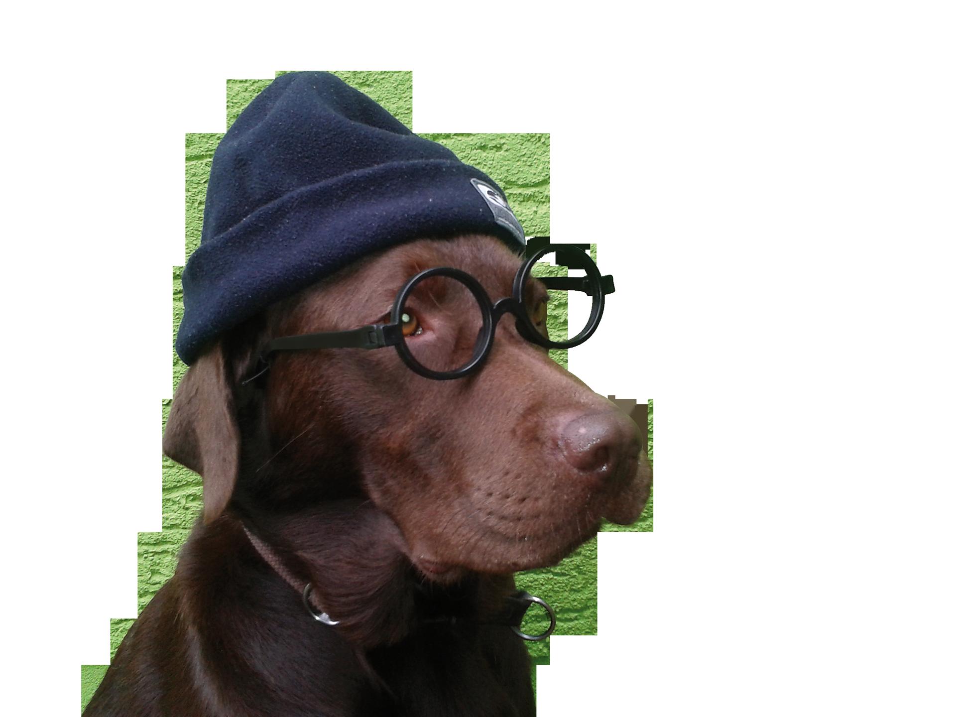 Therapiehund Paul